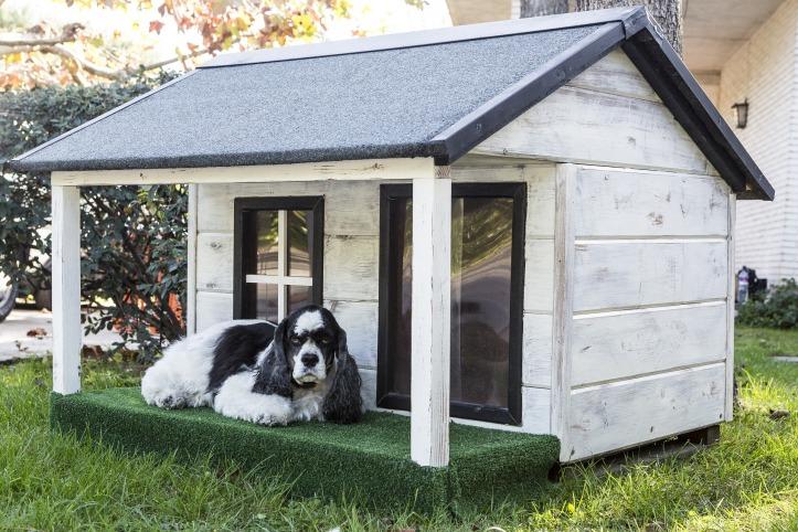 kennels-for-pets-3821854_1920.jpg