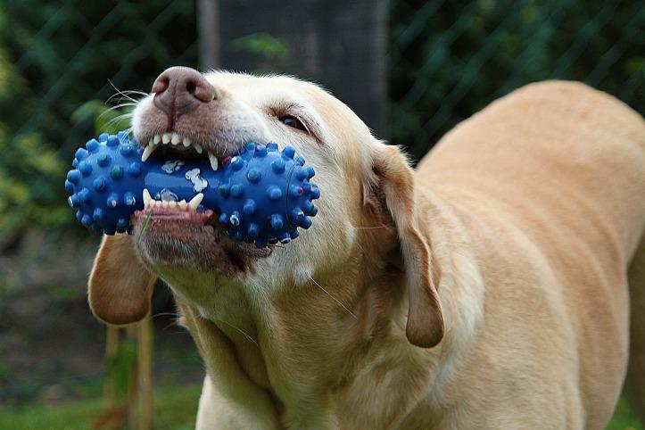 dog-167663_1920