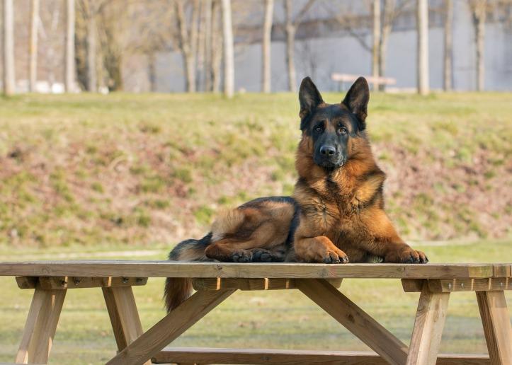 dog-3204401_1920